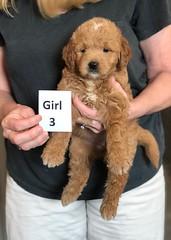 Cindy Girl 3 5-28