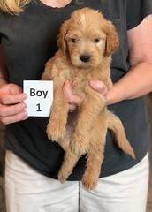 Belle Boy 1 5-28