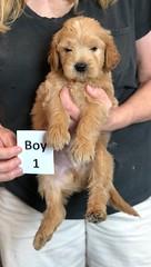 Belle Boy 1 pic 2 5-28