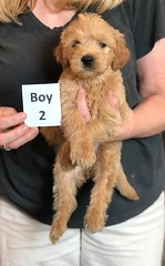 Belle Boy 2 pic 4 5-28