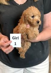 Belle Girl 1 5-28