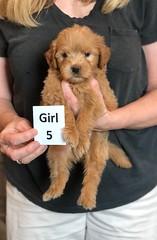 Belle Girl 5 pic 2 5-28