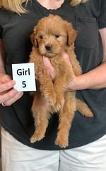 Belle Girl 5 pic 3 5-28