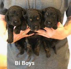 Toffee Bi Boys pic 4 5-28