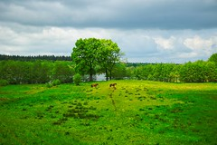 View of the lake and two horses   May 28, 2021   Belau - Plön District - Schleswig-Holstein - Germany