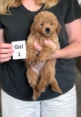 Cindy Girl 1 5-28