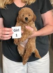 Cindy Girl 1 pic 3 5-28