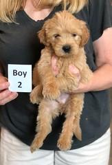Belle Boy 2 5-28
