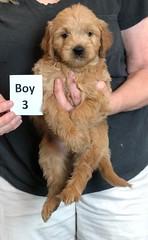 Belle Boy 3 pic 4 5-28