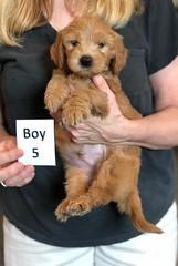 Belle Boy 5 pic 2 5-28