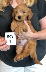 Belle Boy 5 pic 3 5-28