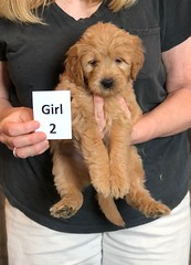Belle Girl 2 pic 2 5-28