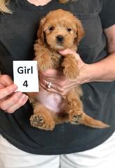 Belle Girl 4 5-28