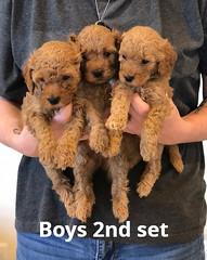 Georgie Boys 2nd set pic 4 5-28