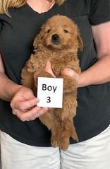 Cindy Boy 3 pic 2 5-28