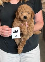 Cindy Girl 2 5-28