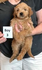Belle Boy 3 pic 3 5-28