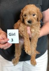 Belle Girl 3 5-28