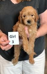 Belle Girl 3 pic 2 5-28