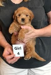 Belle Girl 4 pic 4 5-28