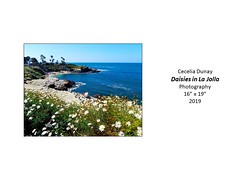 """Daisies in La Jolla • <a style=""""font-size:0.8em;"""" href=""""http://www.flickr.com/photos/124378531@N04/51209833950/"""" target=""""_blank"""">View on Flickr</a>"""