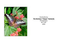 """The Rainbow """"Clipper"""" Butterfly • <a style=""""font-size:0.8em;"""" href=""""http://www.flickr.com/photos/124378531@N04/51209833955/"""" target=""""_blank"""">View on Flickr</a>"""