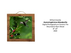 """Hummingbird on Mandevilla • <a style=""""font-size:0.8em;"""" href=""""http://www.flickr.com/photos/124378531@N04/51209833970/"""" target=""""_blank"""">View on Flickr</a>"""