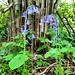 Bluebells by Spiers Lane, Northington
