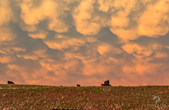 May 23, 2021 - Gorgeous mammatus after a storm on the eastern plains. (Jessica Fey)