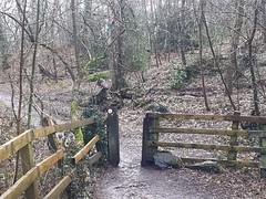 Heading off into woodland