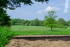 Landscape   June 2, 2021   Ruhwinkel - Plön District - Schleswig-Holstein - Germany