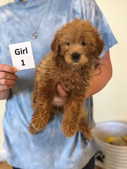 Cindy Girl 1 pic 4 6-4