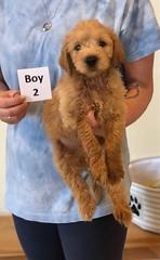 Belle Boy 2 6-4