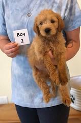 Belle Boy 2 pic 2 6-4