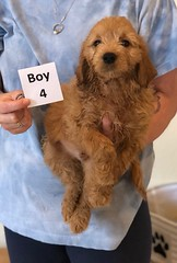 Belle Boy 4 pic 2 6-4