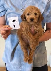 Belle Girl 1 6-4