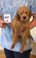 Belle Girl 3 pic 2 6-4