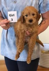 Belle Girl 3 pic 4 6-4