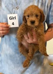 Belle Girl 4 6-4