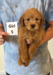 Belle Girl 5 pic 3 6-4
