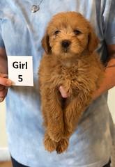 Belle Girl 5 pic 4 6-4