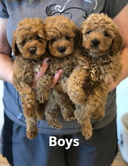 Georgie Boys pic 2 6-4
