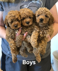 Georgie Boys pic 4 6-4