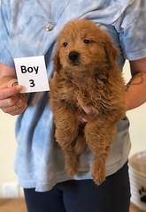 Cindy Boy 3 pic 2 6-4
