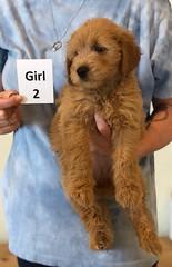 Belle Girl 2 6-4