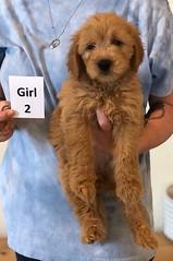 Belle Girl 2 pic 4 6-4