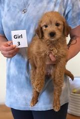 Belle Girl 3 6-4