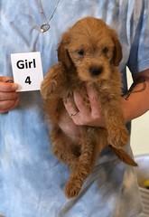 Belle Girl 4 pic 4 6-4