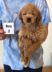 Cindy Boy 2 6-4