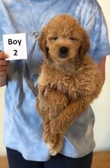 Cindy Boy 2 pic 2 6-4